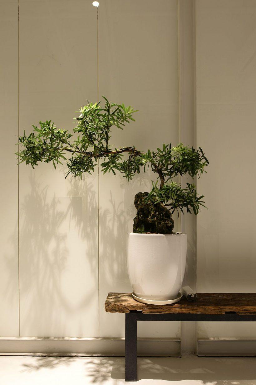 Cubierta vegetal idea de decoración para la oficina moderna